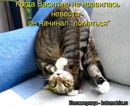 """Котоматрица: Когда Василию не нравилась  невеста - он начинал """"ломаться"""""""