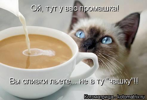 """Котоматрица: Ой, тут у вас промашка! Вы сливки льете... не в ту """"чашку""""!!"""