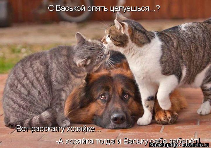 Котоматрица: С Васькой опять целуешься...? Вот расскажу хозяйке... -А хозяйка тогда и Ваську себе заберёт!