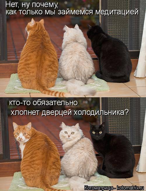 Котоматрица: Нет, ну почему,  как только мы займемся медитацией кто-то обязательно хлопнет дверцей холодильника?