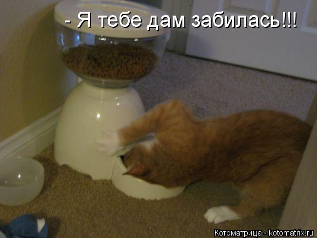 Котоматрица: - Я тебе дам забилась!!!