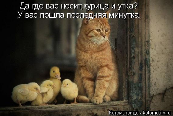 Котоматрица: Да где вас носит,курица и утка? У вас пошла последняя минутка..