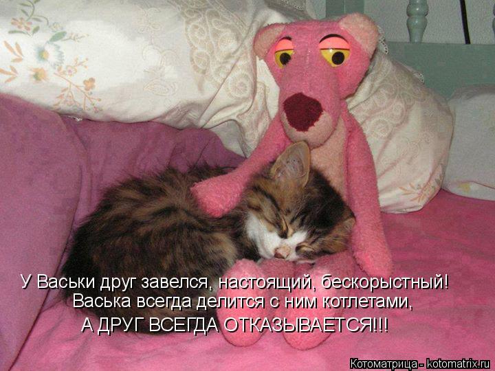 Котоматрица: Васька всегда делится с ним котлетами,  У Васьки друг завелся, настоящий, бескорыстный! А ДРУГ ВСЕГДА ОТКАЗЫВАЕТСЯ!!!