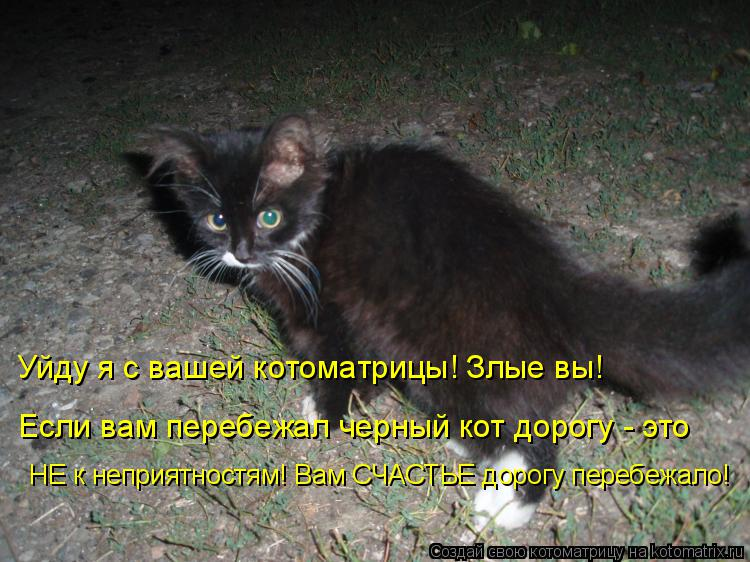 Котоматрица: Уйду я с вашей котоматрицы! Злые вы!  Если вам перебежал черный кот дорогу - это НЕ к неприятностям! Вам СЧАСТЬЕ дорогу перебежало!