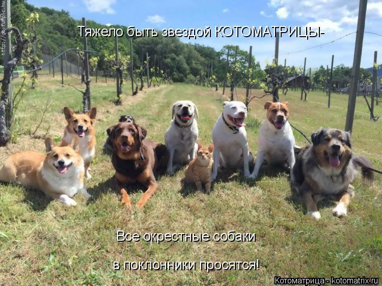 Котоматрица: Тяжело быть звездой КОТОМАТРИЦЫ- Все окрестные собаки в поклонники просятся!