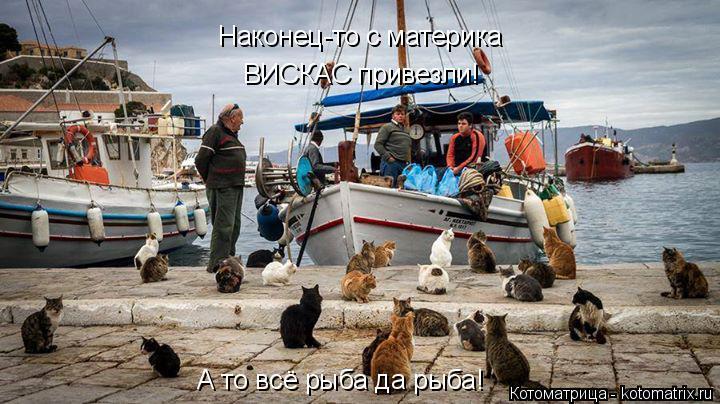 Котоматрица: Наконец-то с материка ВИСКАС привезли! А то всё рыба да рыба!