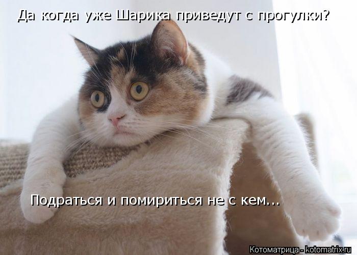Котоматрица: Да когда уже Шарика приведут с прогулки? Подраться и помириться не с кем...