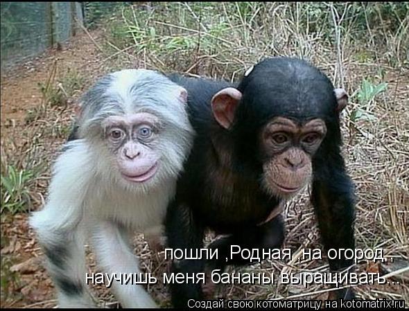 Котоматрица: пошли ,Родная ,на огород , научишь меня бананы выращивать...