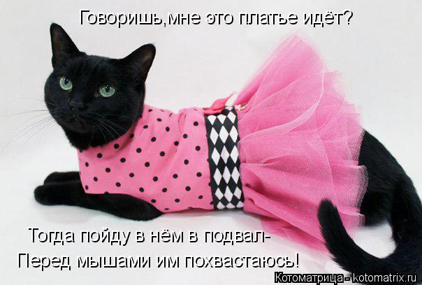 Котоматрица: Говоришь,мне это платье идёт? Тогда пойду в нём в подвал- Перед мышами им похвастаюсь!