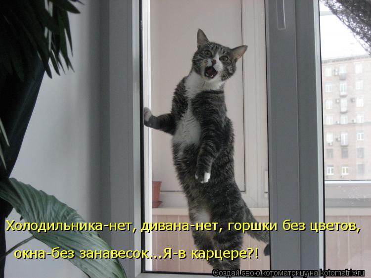 Котоматрица: Холодильника-нет, дивана-нет, горшки без цветов, окна-без занавесок...Я-в карцере?!