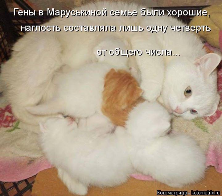 Котоматрица: Гены в Маруськиной семье были хорошие,  наглость составляла лишь одну четверть от общего числа...