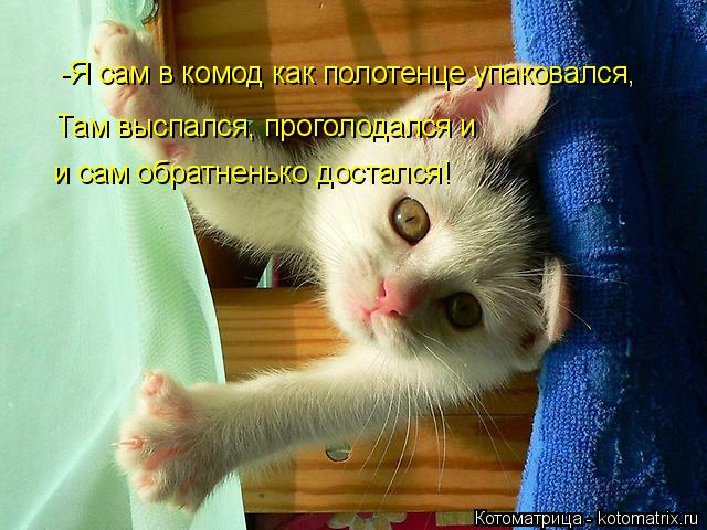 Котоматрица: -Я сам в комод как полотенце упаковался, Там выспался, проголодался и  и сам обратненько достался!