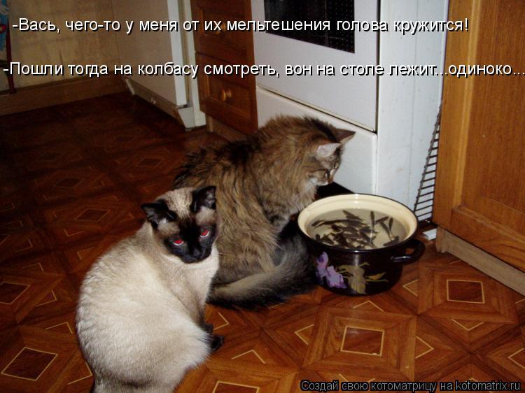 Котоматрица: -Вась, чего-то у меня от их мельтешения голова кружится! -Пошли тогда на колбасу смотреть, вон на столе лежит...одиноко...