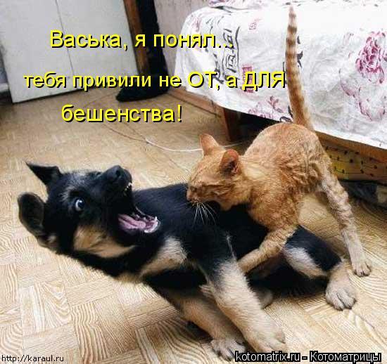 Котоматрица: Васька, я понял... тебя привили не ОТ, а ДЛЯ  бешенства!