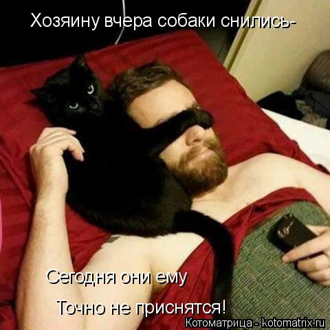 Котоматрица: Хозяину вчера собаки снились- Сегодня они ему Точно не приснятся!