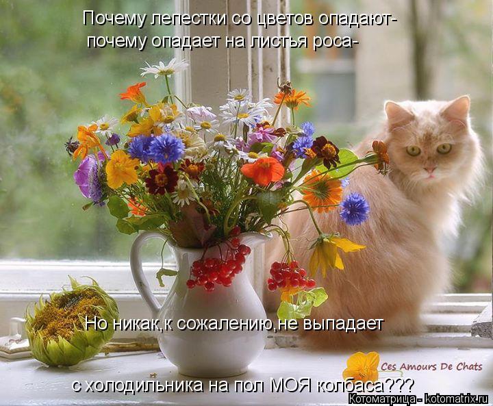 Котоматрица: Почему лепестки со цветов опадают- почему опадает на листья роса- Но никак,к сожалению,не выпадает с холодильника на пол МОЯ колбаса???