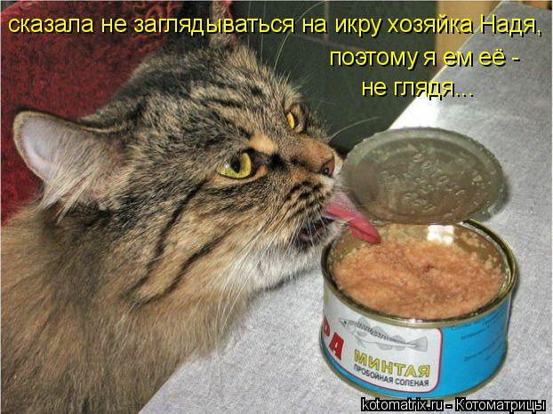 Котоматрица: сказала не заглядываться на икру хозяйка Надя, поэтому я ем её -  не глядя...