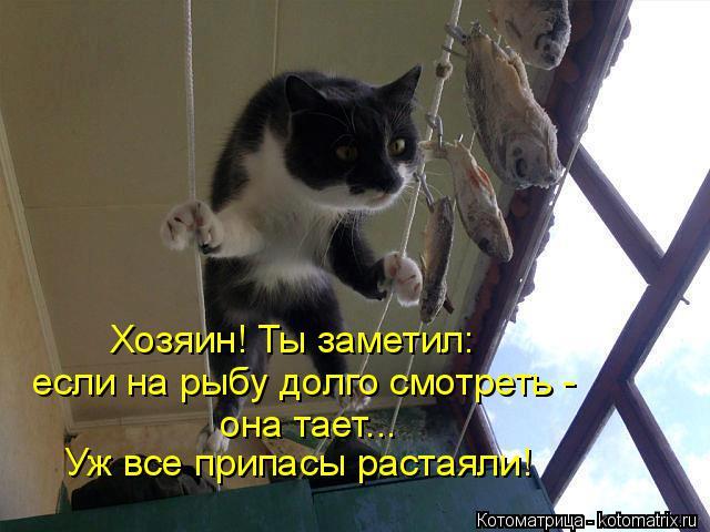 Котоматрица: Хозяин! Ты заметил: если на рыбу долго смотреть - она тает... Уж все припасы растаяли!