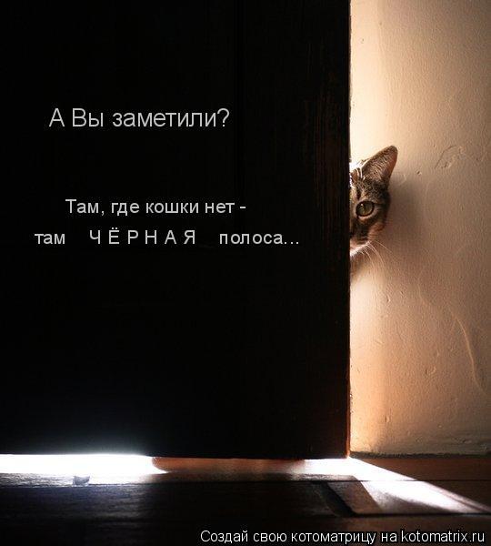 Котоматрица: там    Ч Ё Р Н А Я    полоса... А Вы заметили? Там, где кошки нет -