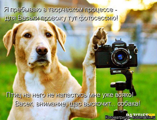 Котоматрица: Я пребываю в творческом процессе - для Васьки провожу тут фотосессию! Птиц на него не напастись мне уже всяко! Васек, внимание, щас выскочит..