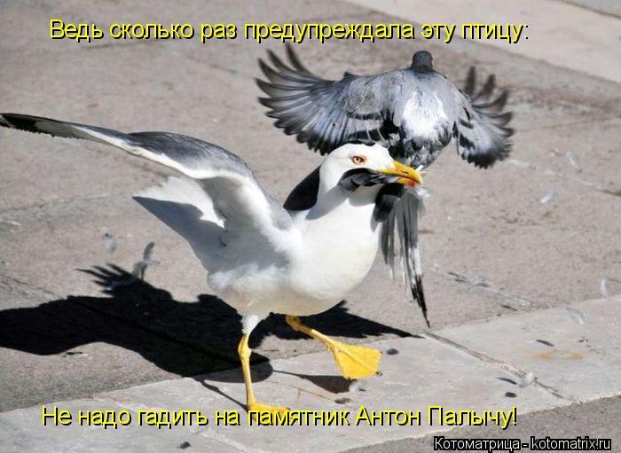 Котоматрица: Ведь сколько раз предупреждала эту птицу: Не надо гадить на памятник Антон Палычу!