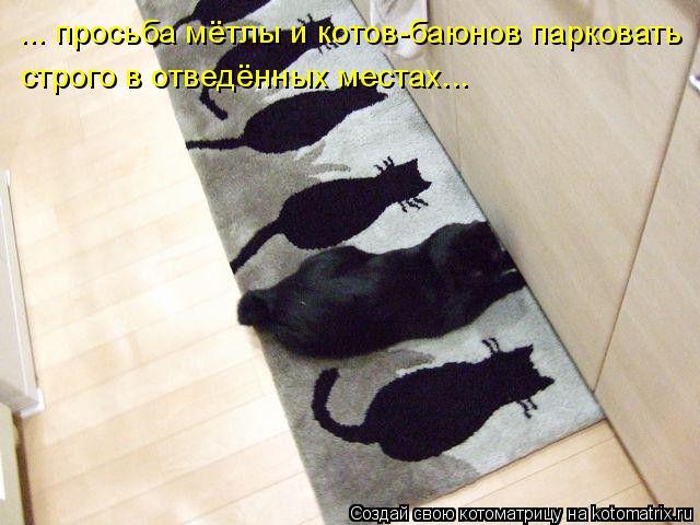 Котоматрица: ... просьба мётлы и котов-баюнов парковать строго в отведённых местах...