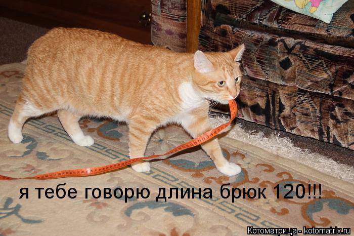 Котоматрица: я тебе говорю длина брюк 120!!!