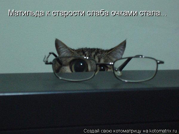 Котоматрица: Матильда к старости слаба очками стала...