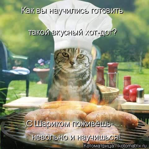 Котоматрица: Как вы научились готовить  такой вкусный хот-дог? С Шариком поживёшь- невольно и научишься!