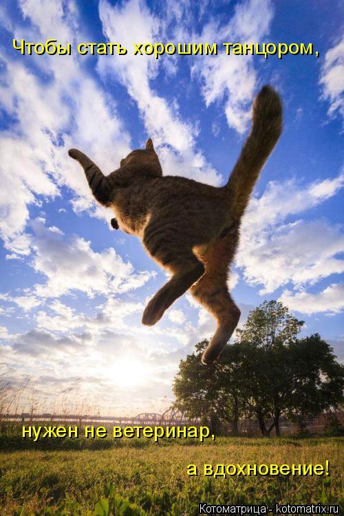 Котоматрица: Чтобы стать хорошим танцором, нужен не ветеринар,  а вдохновение!