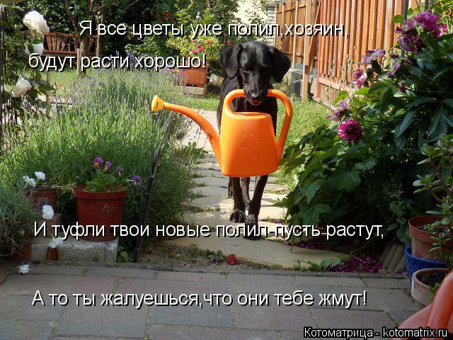Котоматрица: Я все цветы уже полил,хозяин, будут расти хорошо! И туфли твои новые полил-пусть растут, А то ты жалуешься,что они тебе жмут!