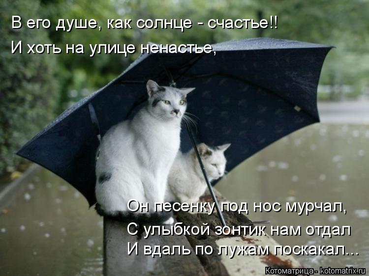 Котоматрица: В его душе, как солнце - счастье!! И хоть на улице ненастье, И вдаль по лужам поскакал... Он песенку под нос мурчал, С улыбкой зонтик нам отдал