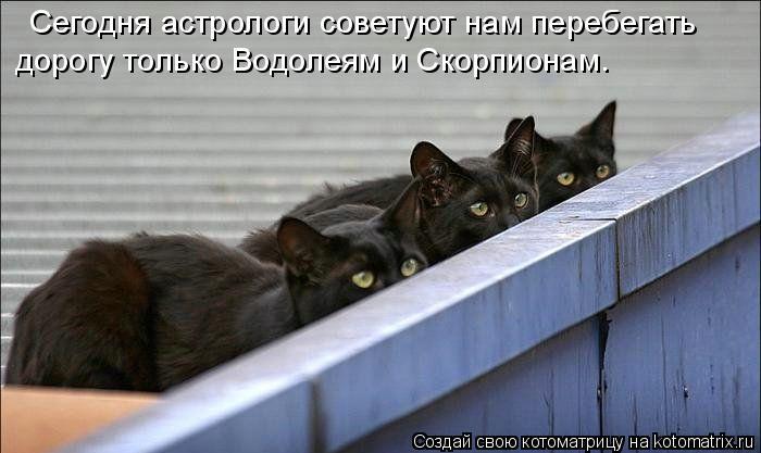 Котоматрица: Сегодня астрологи советуют нам перебегать дорогу только Водолеям и Скорпионам.