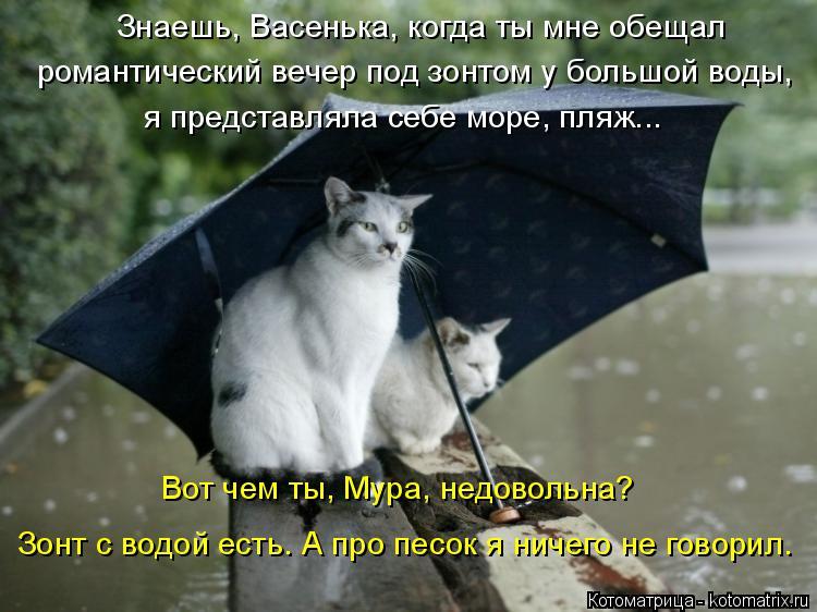 Котоматрица: Знаешь, Васенька, когда ты мне обещал романтический вечер под зонтом у большой воды, я представляла себе море, пляж... Вот чем ты, Мура, недово