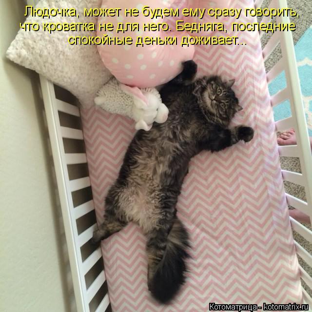 Котоматрица: Людочка, может не будем ему сразу говорить, что кроватка не для него. Бедняга, последние спокойные деньки доживает...