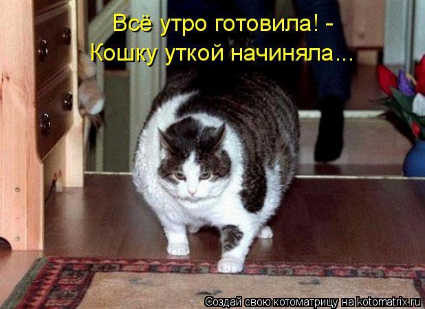 Котоматрица: Всё утро готовила! -  Кошку уткой начиняла...