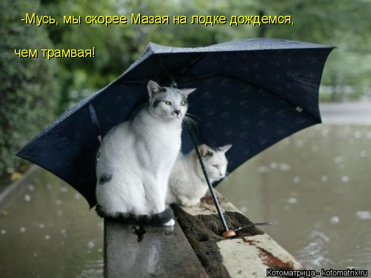 Котоматрица: -Мусь, мы скорее Мазая на лодке дождемся, чем трамвая!