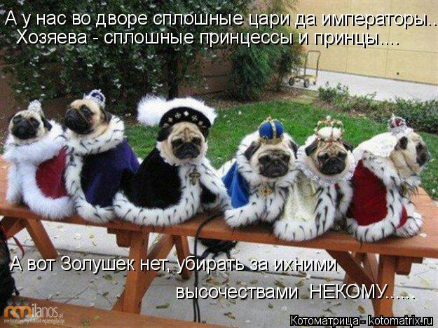 Котоматрица: А у нас во дворе сплошные цари да императоры.... Хозяева - сплошные принцессы и принцы.... А вот Золушек нет, убирать за ихними  высочествами  НЕ