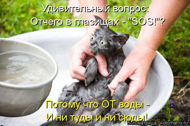 """Котоматрица: Удивительный вопрос: Отчего в глазищах - """"SOS!""""? Потому что ОТ воды - И ни туды и ни сюды!"""