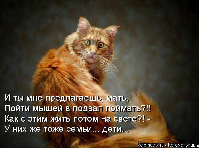 Котоматрица: И ты мне предлагаешь, мать,  Пойти мышей в подвал поймать?!! Как с этим жить потом на свете?! -  У них же тоже семьи... дети...