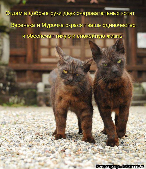 Котоматрица: Отдам в добрые руки двух очаровательных котят.  и обеспечат тихую и спокойную жизнь Васенька и Мурочка скрасят ваше одиночество