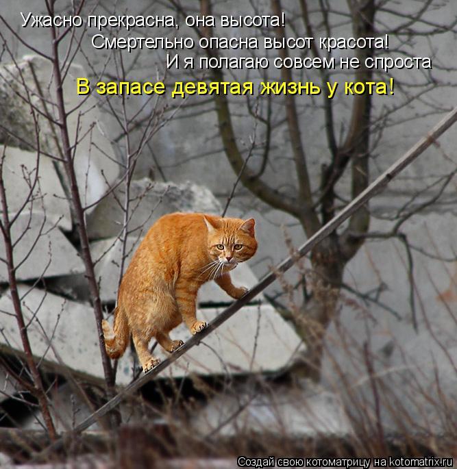 Котоматрица: Ужасно прекрасна, она высота!  Смертельно опасна высот красота!  И я полагаю совсем не спроста В запасе девятая жизнь у кота!