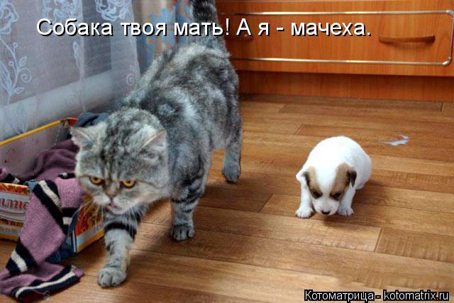 Котоматрица: Собака твоя мать! А я - мачеха.