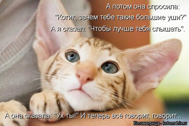 """Котоматрица: А потом она спросила:  """"Котик, зачем тебе такие большие уши?"""" А я сказал: """"Чтобы лучше тебя слышать"""". А она сказала: """"Ух ты!"""" И теперь всё говорит,"""