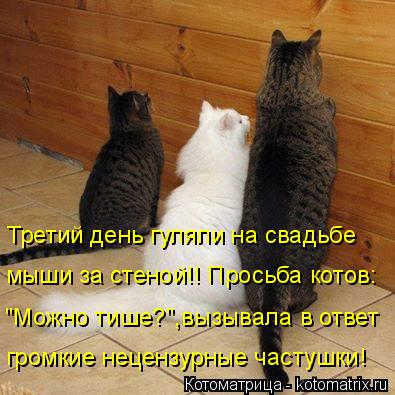 """Котоматрица: громкие нецензурные частушки! """"Можно тише?"""",вызывала в ответ мыши за стеной!! Просьба котов: Третий день гуляли на свадьбе"""