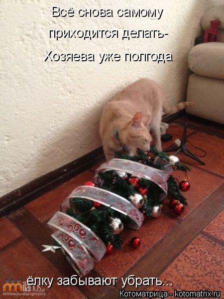 Котоматрица: Всё снова самому  приходится делать- Хозяева уже полгода ёлку забывают убрать...