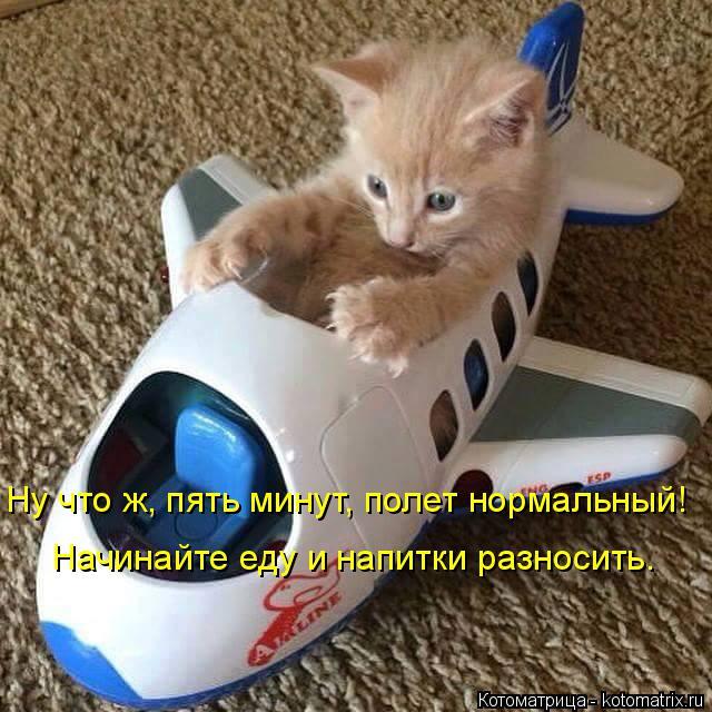 Котоматрица: Ну что ж, пять минут, полет нормальный! Начинайте еду и напитки разносить.