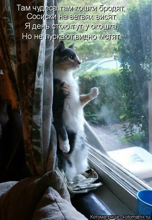 Котоматрица: Там чудеса,там кошки бродят, Сосиски на ветвях висят. Я день стою тут у окошка, Но не пускают,видно мстят.