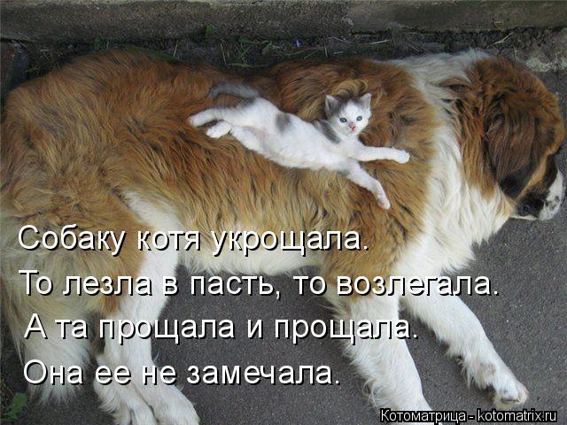 Котоматрица: Собаку котя укрощала. То лезла в пасть, то возлегала. А та прощала и прощала. Она ее не замечала.