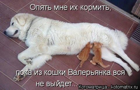 Котоматрица: Опять мне их кормить, пока из кошки Валерьянка вся не выйдет...